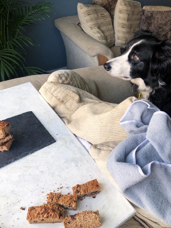 Breakfast bars shot with dog watching